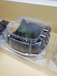 Grass seed growing in student made terrarium